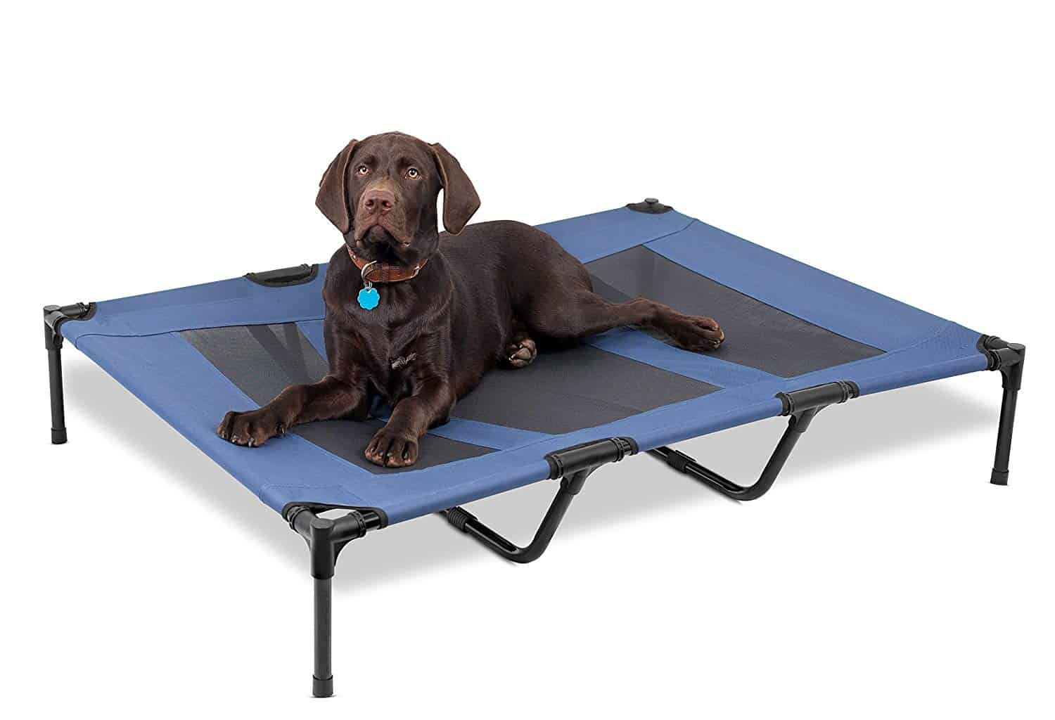 Elevated Dog Beds